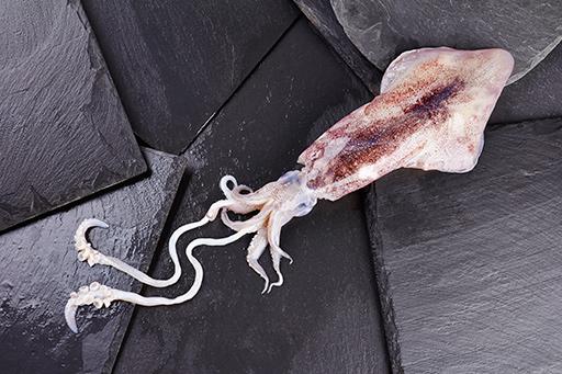 calamar - Pescados