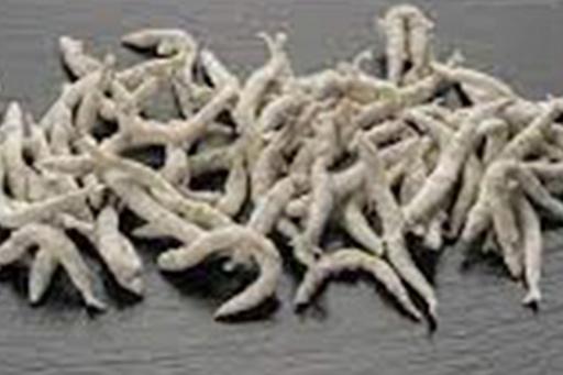 chanquete enharinado - Ahumados
