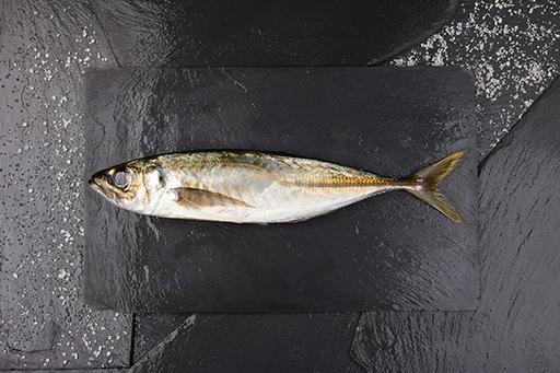 chicharro - Pescados