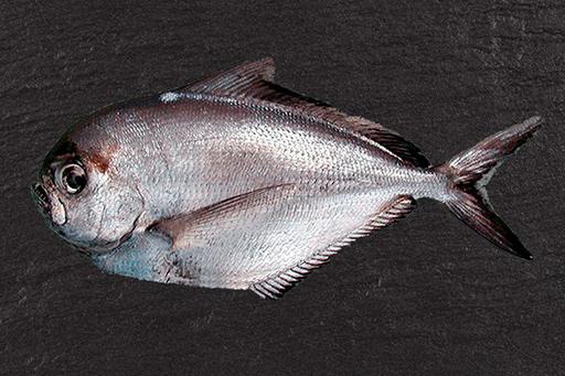 palomera - Pescados